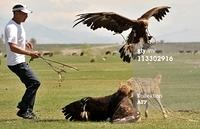 Adlerangriff Adler greift Hund an eagle attacks dog Adlerattacke 1