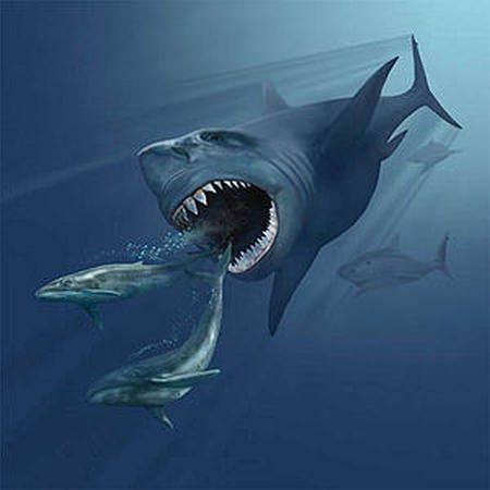 Megalodon - größter Hai - größter Fisch der Welt