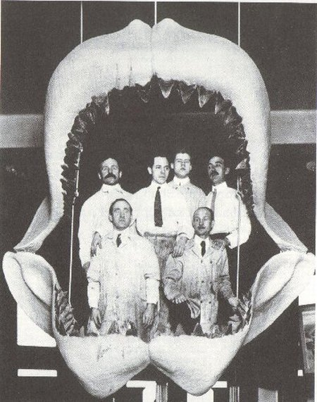 Megalodon - größter Hai - größter Fisch der Welt - Gebiss - Kiefer