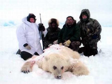 Eisbär - Riesen Bär - Größter Bär der Welt