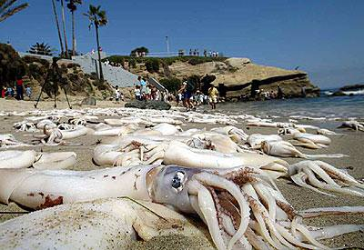 Riesenkalmar - Riesenkrake - giant squid