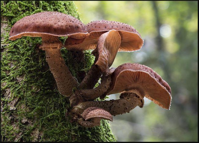 Das größte Lebenwesen der Erde - Das größte Lebenwesen der Welt - das älteste Lebewesen der Erde - Riesenpilz - der größte Pilz der Welt