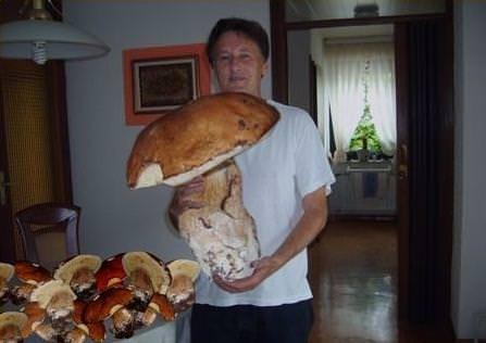 Riesenpilz - Riesen Pilz - biggest mushroom - der größte Pilz der Welt