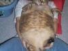 Dickste Katze der Welt