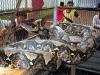 Größte Schlange der Welt - Netzpython