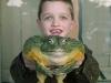 Ochsenfrosch - die größten Frösche der Welt