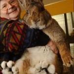 Riesen Hase - größter Hase der Welt - Giant rabbit